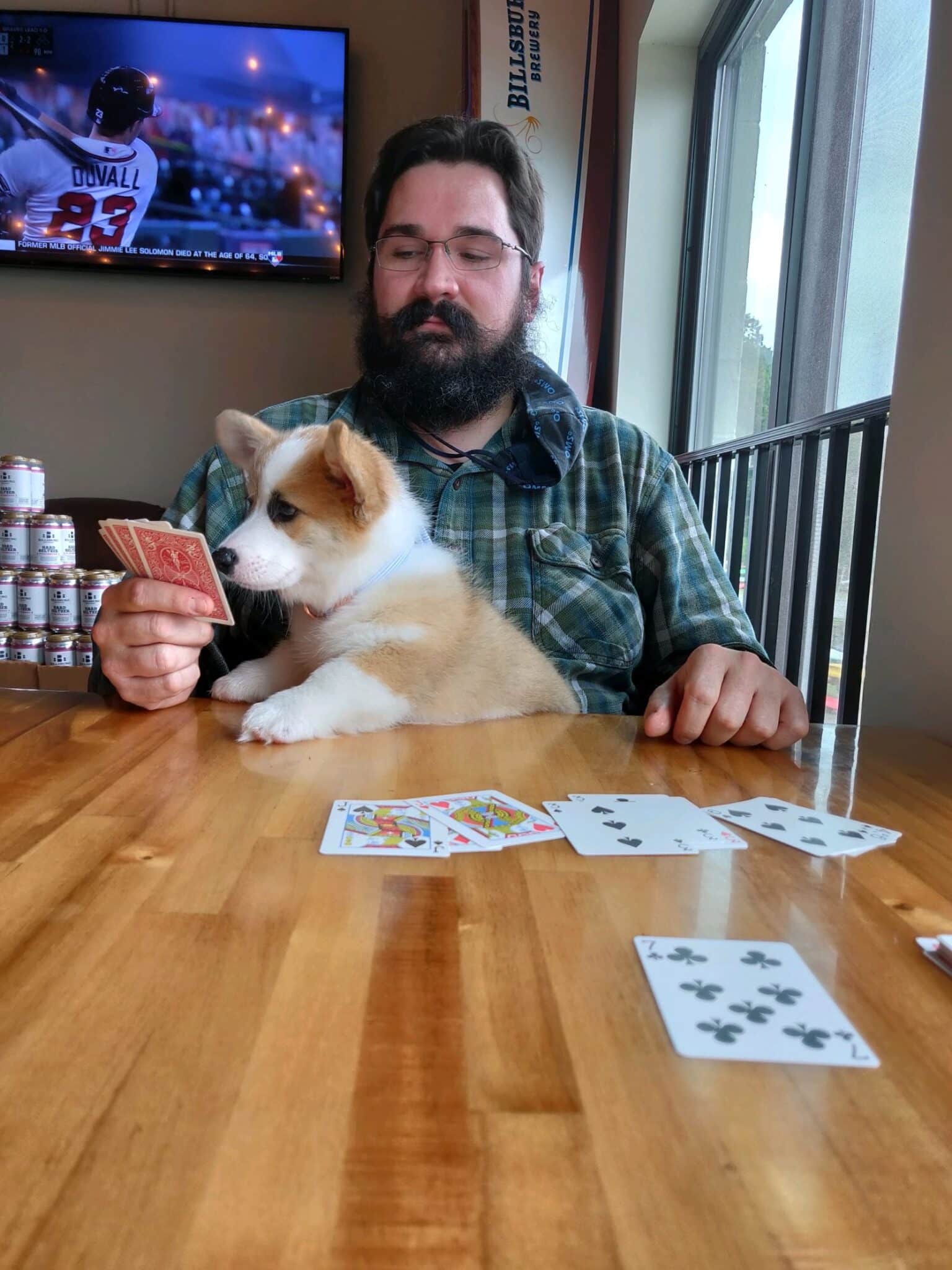 bearded man playing cards with corgi puppy